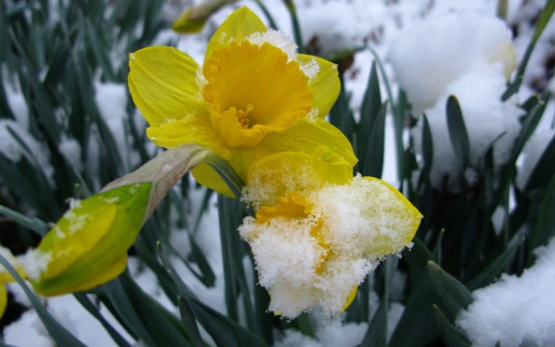 Oh No – an inch of snow! Let's not panic……